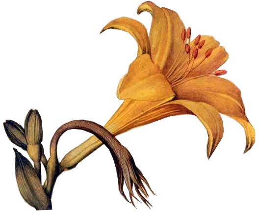 Madonna dei fiori albana secco docg
